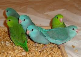 baby parrots to sell